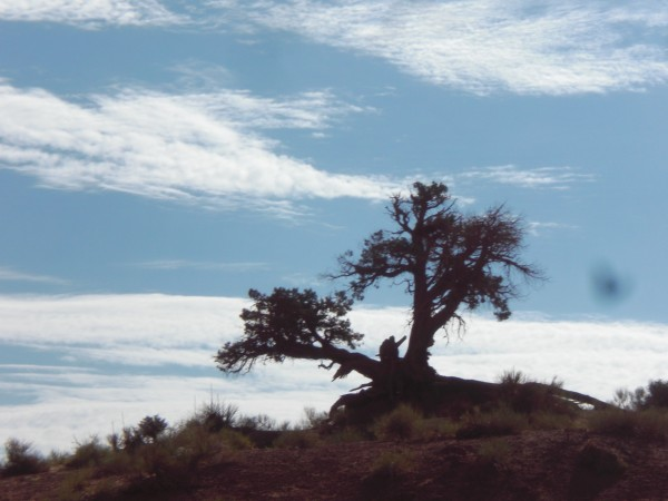 A lovely tree in Monument Valley